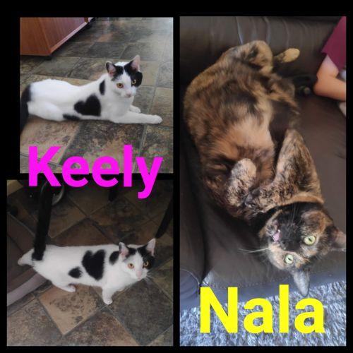 Keely and Nala - Domestic Medium Hair Cat