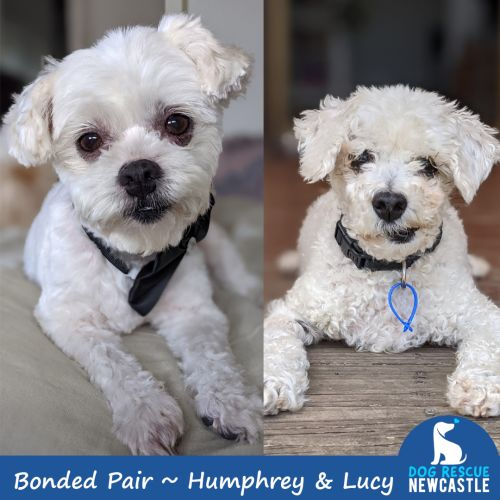 Humphrey & Lucy ~ Small Breed Bonded Pair