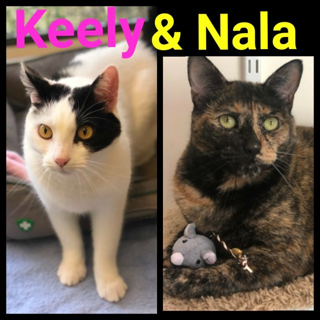 Photo of Keely And Nala