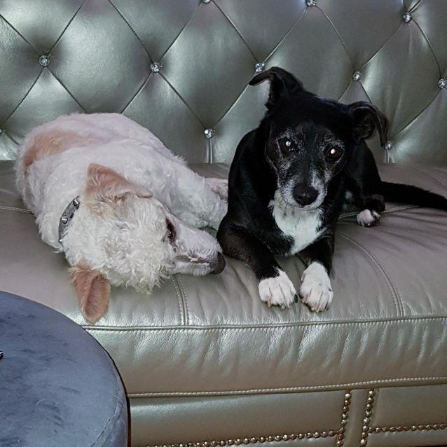 Photo of Baileykin & Piccoloni