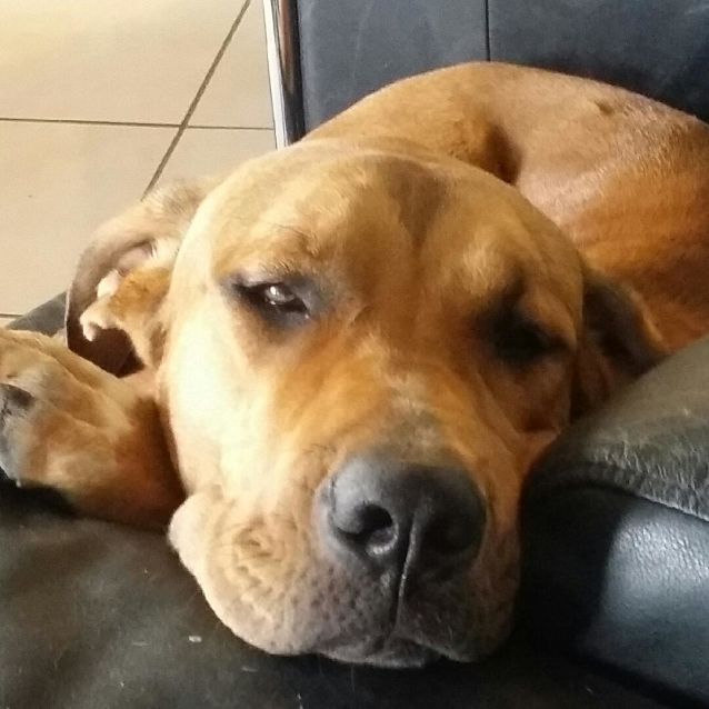 Photo of Scooby Doo (On Adoption Trial)