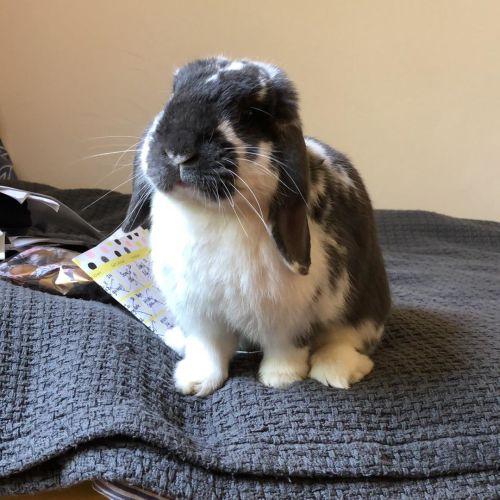 Marble -  Rabbit