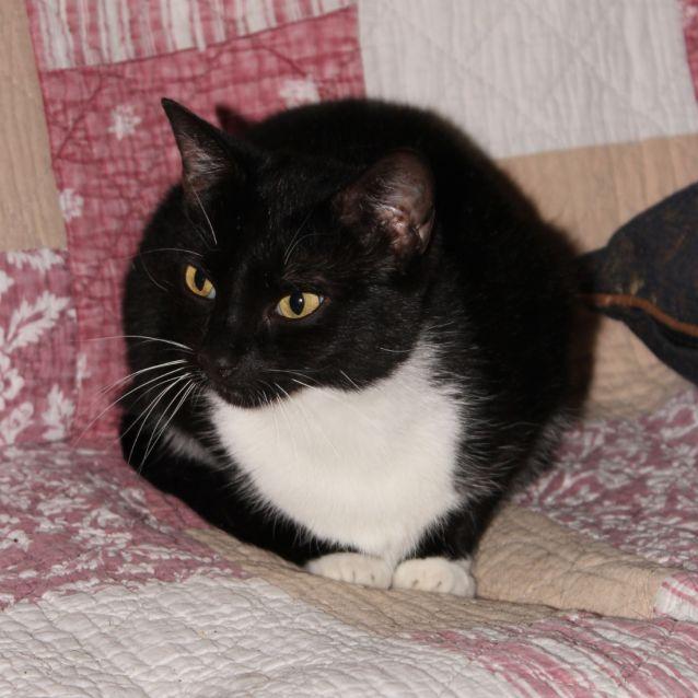 Photo of Zina **2nd Chance Cat Rescue**