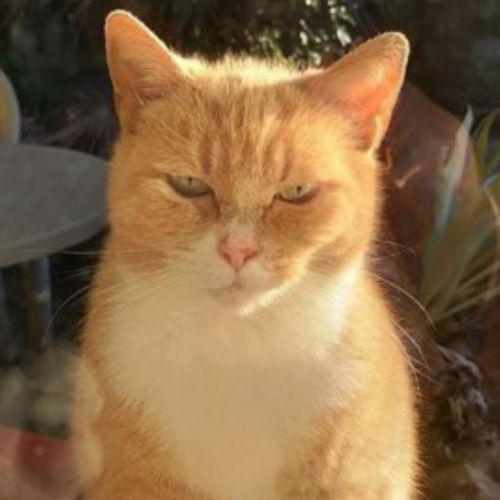 💕💕💕Twiggy💕💕💕 - Domestic Short Hair Cat