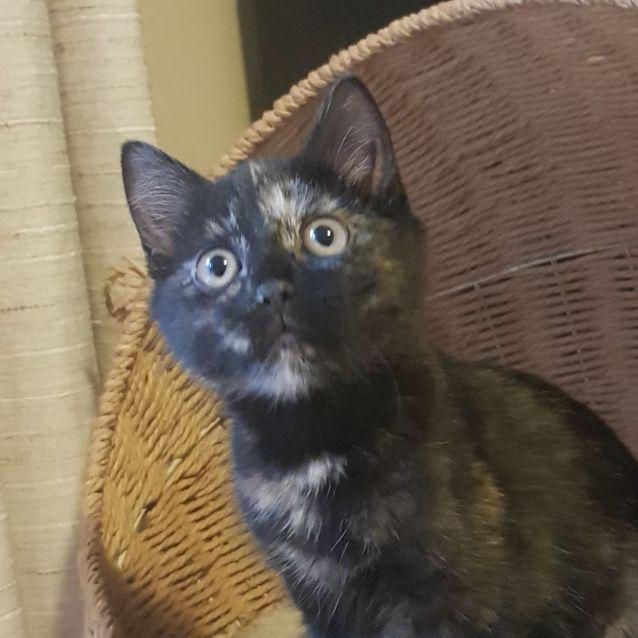 Photo of Dasha