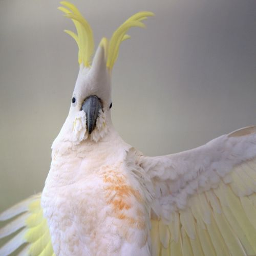 Julian -  Bird