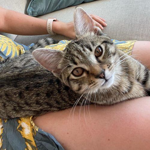 Gnocchi ** 2nd Chance Cat Rescue**
