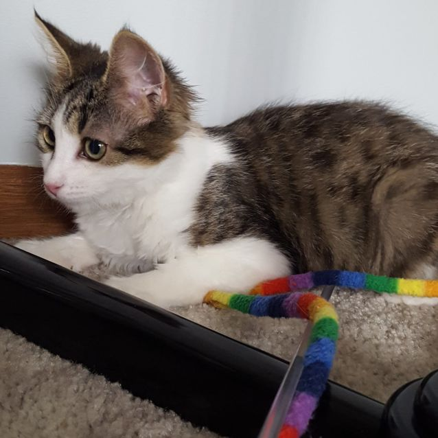 Photo of Lolly ^^Dandy Cat Rescue^^