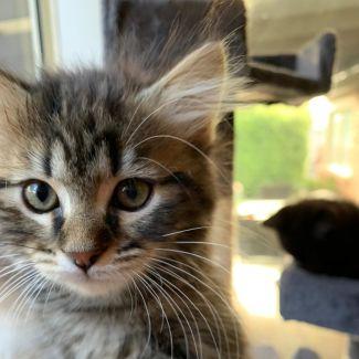 Jasper ^^Dandy Cat Rescue^^