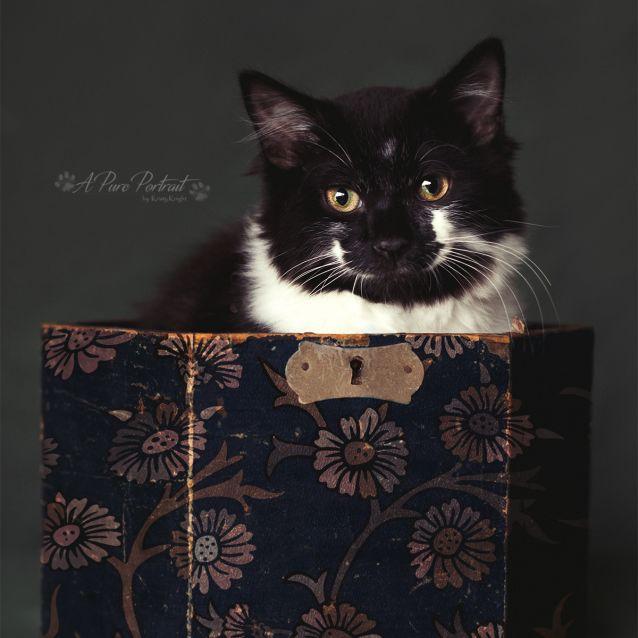 Photo of Hagrid