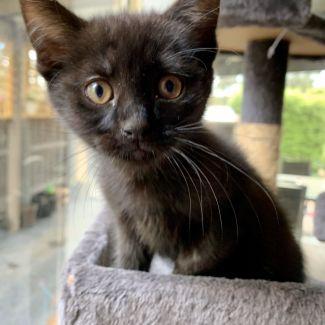 Coco ^^Dandy Cat Rescue^^