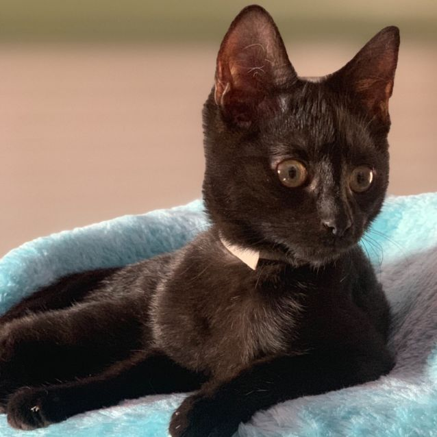 Photo of Adoption Only $150! Batman