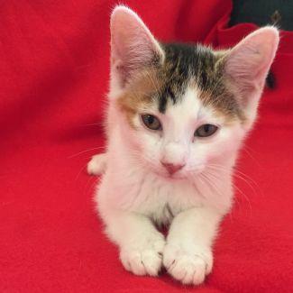 Valentina ^^Dandy Cat Rescue^^