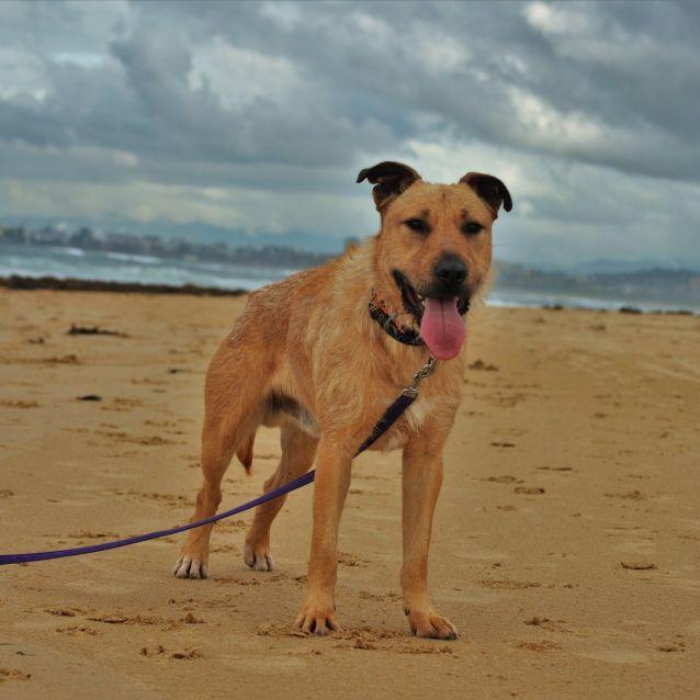 Photo of Wolfie