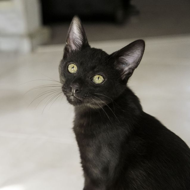 Photo of Vadar