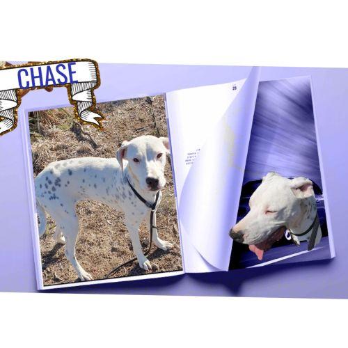 Chase - Mixed Breed Dog