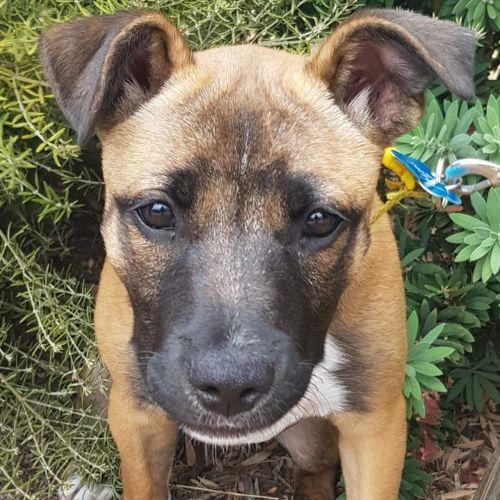 Lotus - Mixed Breed Dog