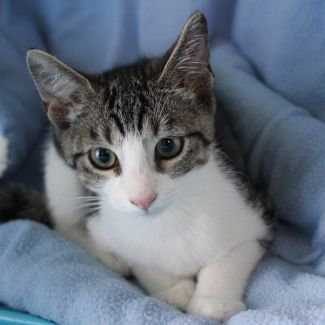 LeRoy **2nd Chance Cat Rescue**
