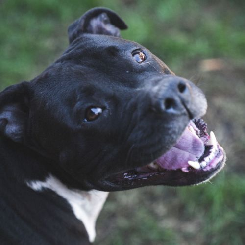 Foster Carer Wated or Foster to Adopt Home Loki