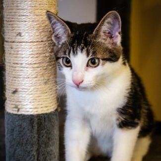Mouchie ^^Dandy Cat Rescue^^