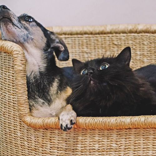 Raven. Best friend is a doggo :)