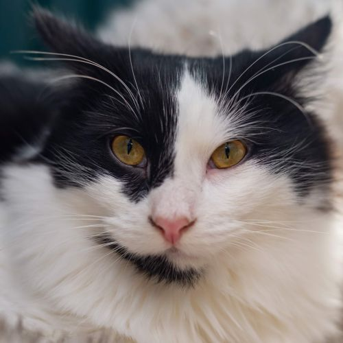 Freddy Kruger ** 2nd Chance Cat Rescue**