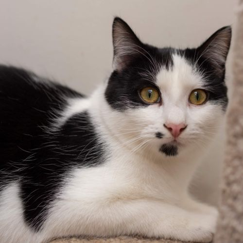 James Cook **2nd Chance Cat Rescue**