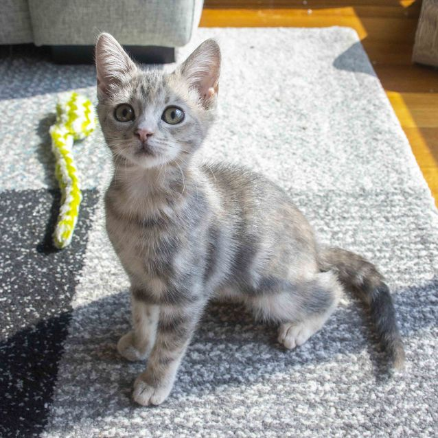 Photo of Holly ^^Dandy Cat Rescue^^
