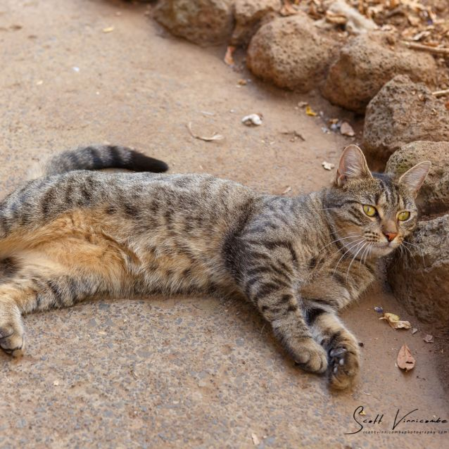 Photo of Charity ^^Dandy Cat Rescue^^