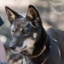Photo of Maya Dingo
