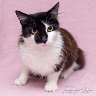 Ziggy ** 2nd Chance Cat Rescue**