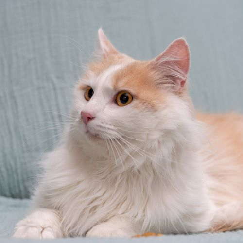Gerry **2nd Chance Cat Rescue**