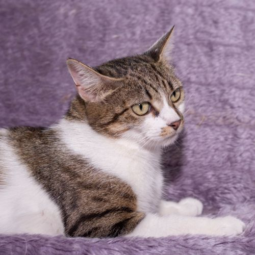 Doris Day  **2nd Chance Cat Rescue**