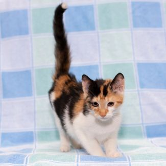 Denice **2nd Chance Cat Rescue**