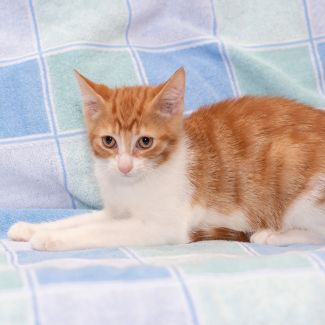 B2 **2nd Chance Cat Rescue**