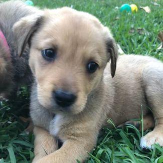 Griffin ~ Adoption Pending ~