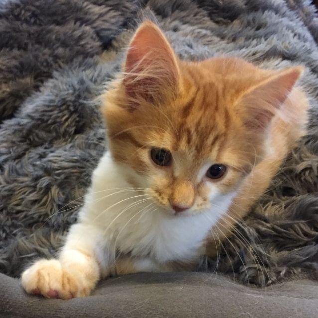 Photo of Nemo ^^Dandy Cat Rescue^^