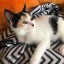 Photo of Mishka ^^Dandy Cat Rescue^^