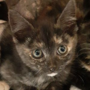 No photo for Hayley  Reduced Adoption Fee