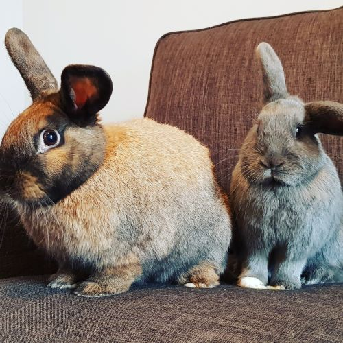 Bubbles and Nugget -  Rabbit
