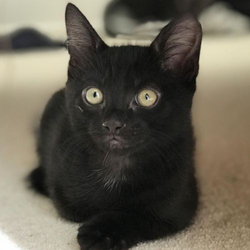 Toothless **2nd Chance Cat Rescue**