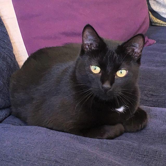 Photo of Wallis