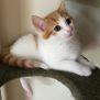 Photo of Cartman ^^Dandy Cat Rescue^^