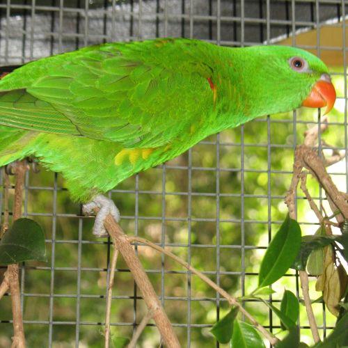 Spark -  Bird