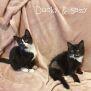 Photo of Sassy & Ducky
