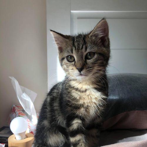 Jessie **2nd Chance Cat Rescue**