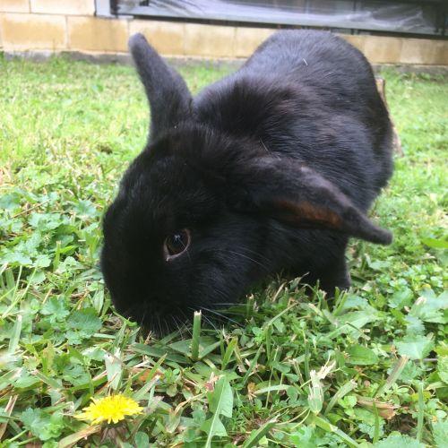 Pip -  Rabbit