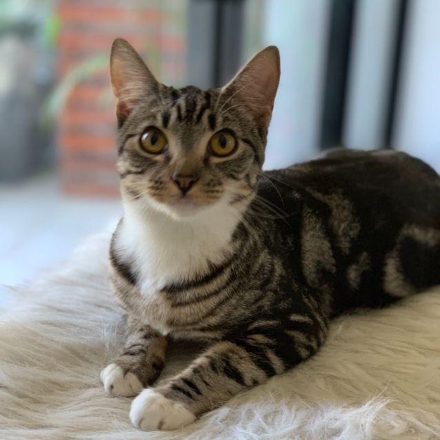 Photo of Prim
