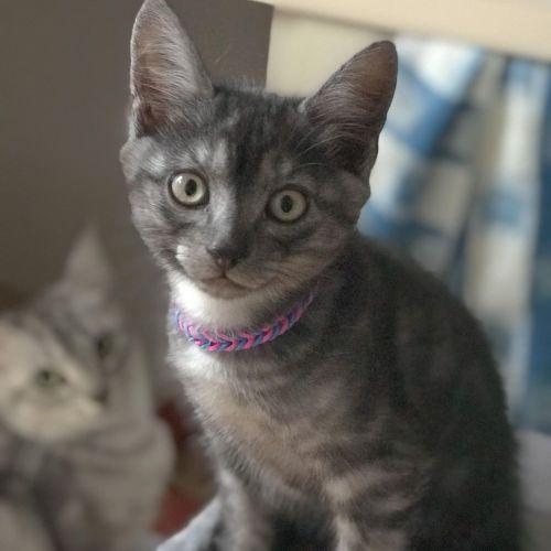 Toughnut **2nd Chance Cat Rescue**