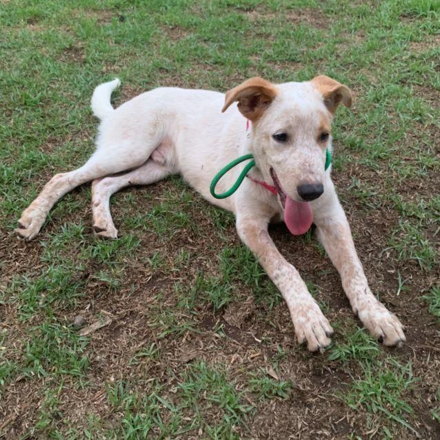 Photo of Casper (On Adoption Trial)